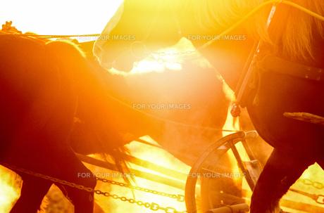 早朝の馬の写真素材 [FYI00214161]