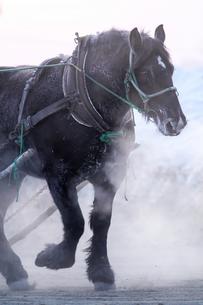 冬の馬の素材 [FYI00214163]