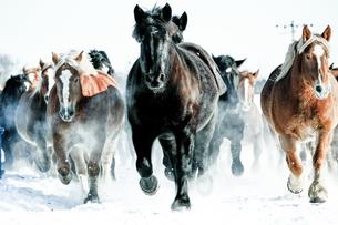 走る馬の素材 [FYI00214166]