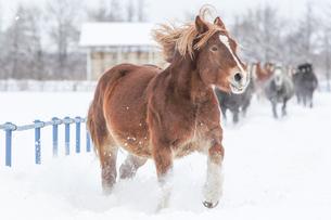 冬の牝馬の写真素材 [FYI00214205]