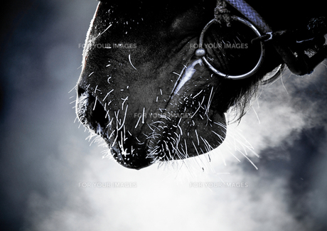 馬の息の素材 [FYI00214221]