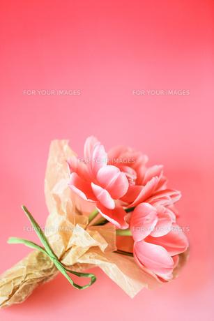 ピンクの花束の写真素材 [FYI00214248]