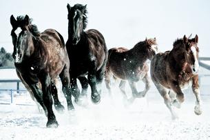 疾走する馬の素材 [FYI00214303]