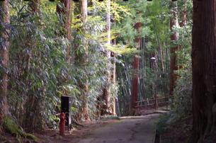 竹林を進む道の写真素材 [FYI00214438]