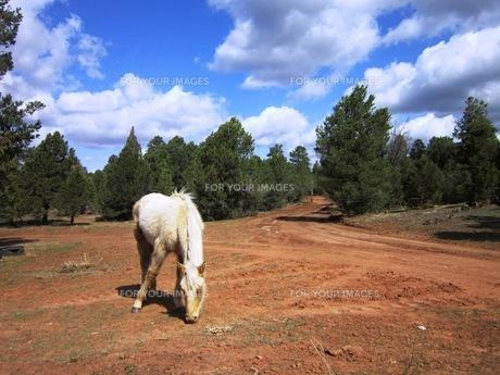 馬の放牧の写真素材 [FYI00214554]