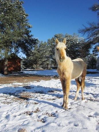 子馬の写真素材 [FYI00214559]