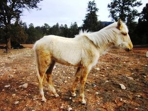 馬の放牧の写真素材 [FYI00214584]