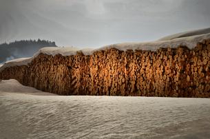 木材置き場の写真素材 [FYI00214609]