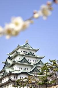 名古屋城と白梅の写真素材 [FYI00214847]