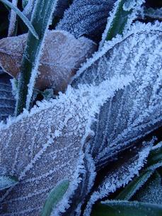 冬の訪れの写真素材 [FYI00215313]