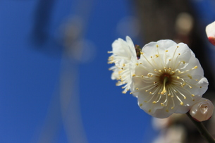 早春花の写真素材 [FYI00215315]
