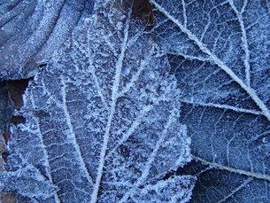 落葉霜の図の写真素材 [FYI00215316]
