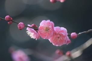 春薫の写真素材 [FYI00215340]