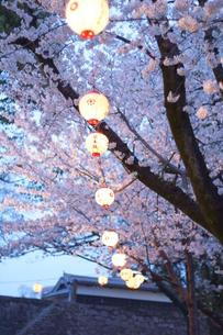 花見提灯の写真素材 [FYI00215432]