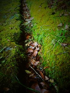 苔に覆われた溝の写真素材 [FYI00215508]