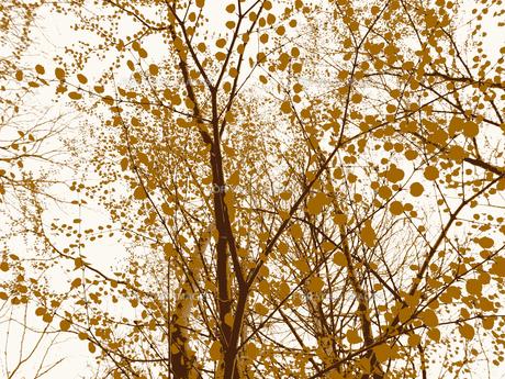 玉のような葉の写真素材 [FYI00215511]