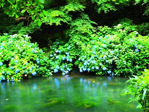 湖と紫陽花の写真素材 [FYI00215564]