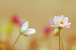 HOTして春の写真素材 [FYI00215625]