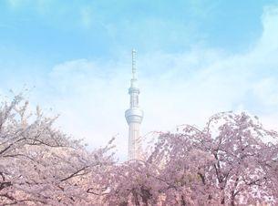 桜と東京スカイツリーの写真素材 [FYI00215776]