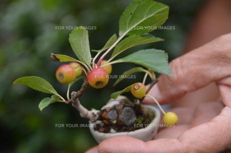 小品盆栽 の写真素材 [FYI00215996]