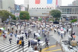 雨の渋谷 交差点の写真素材 [FYI00216030]