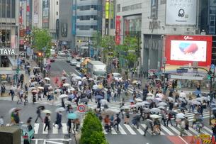 雨の渋谷 交差点の写真素材 [FYI00216034]