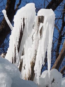 氷柱の写真素材 [FYI00216037]