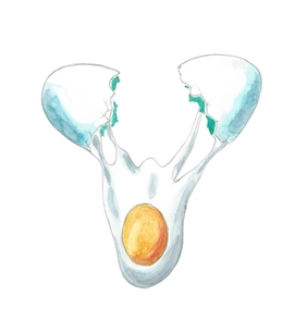 生卵を割るの写真素材 [FYI00216125]