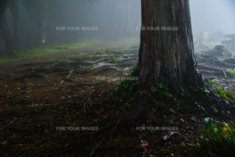 霧の中の植物の素材 [FYI00216206]