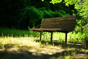 晴れた日の緑の中のベンチの写真素材 [FYI00216215]
