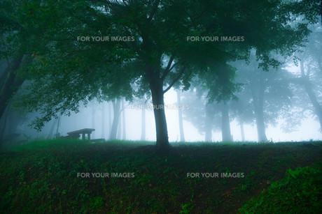 霧の森林の素材 [FYI00216218]