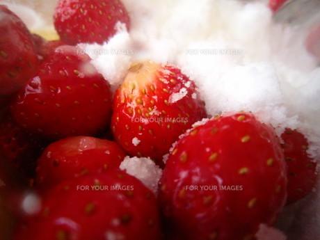 砂糖といちごの写真素材 [FYI00216258]