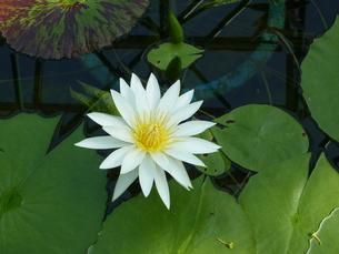 花の写真素材 [FYI00216279]