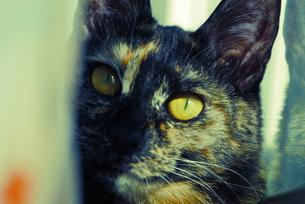 猫のお気に入りの場所の写真素材 [FYI00216720]