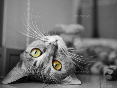 猫の写真素材 [FYI00216740]