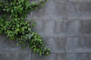 ブロック塀にツタの写真素材 [FYI00216745]