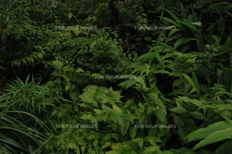 生い茂る草葉の素材 [FYI00216766]