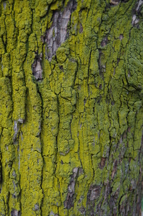 木と苔の写真素材 [FYI00216784]