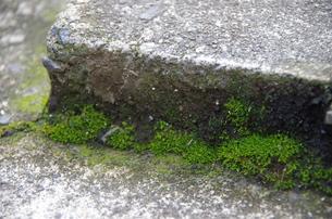石と苔の写真素材 [FYI00216787]