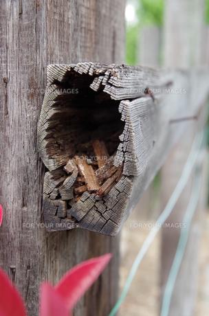 木の洞窟の写真素材 [FYI00216795]