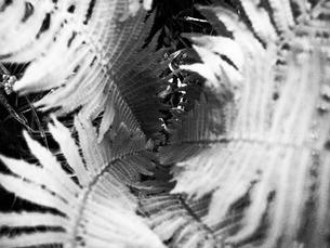 シダ植物。ブラックホールの写真素材 [FYI00216815]