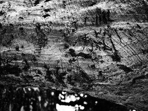 轟く樹皮。デコボコの写真素材 [FYI00216828]