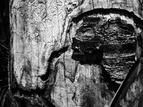 怒り?樹皮の模様の写真素材 [FYI00216830]