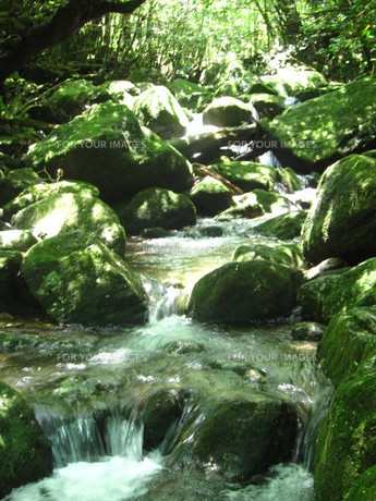 屋久島の小川の写真素材 [FYI00216873]