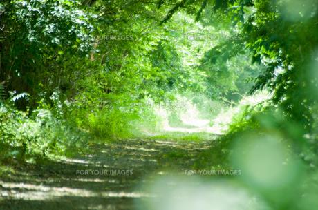 森のトンネルの写真素材 [FYI00216940]