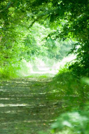 森のトンネルの写真素材 [FYI00216941]