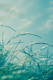 なびく草の素材 [FYI00216947]