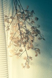 窓辺の写真素材 [FYI00217005]