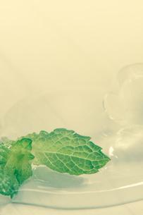 溶ける氷とミントの写真素材 [FYI00217028]