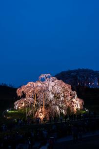 滝桜の写真素材 [FYI00217100]